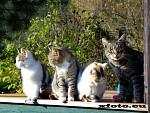 Kočky na zápraží