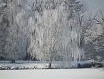 Zmrzlá bříza v Lednickém parku