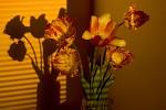 Tulipány a pruhy