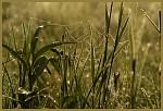Co najdeš v trávě