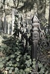 Ze židovského hřbitova