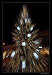 Sen o Vánočním stromku?