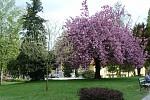jar v parku