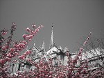 Notre Dame na jar