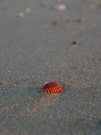 Plážová