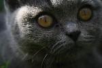 Lemur nebo kočka :P