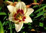Květ v ranní rose