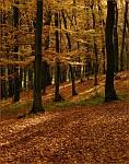 V lesi