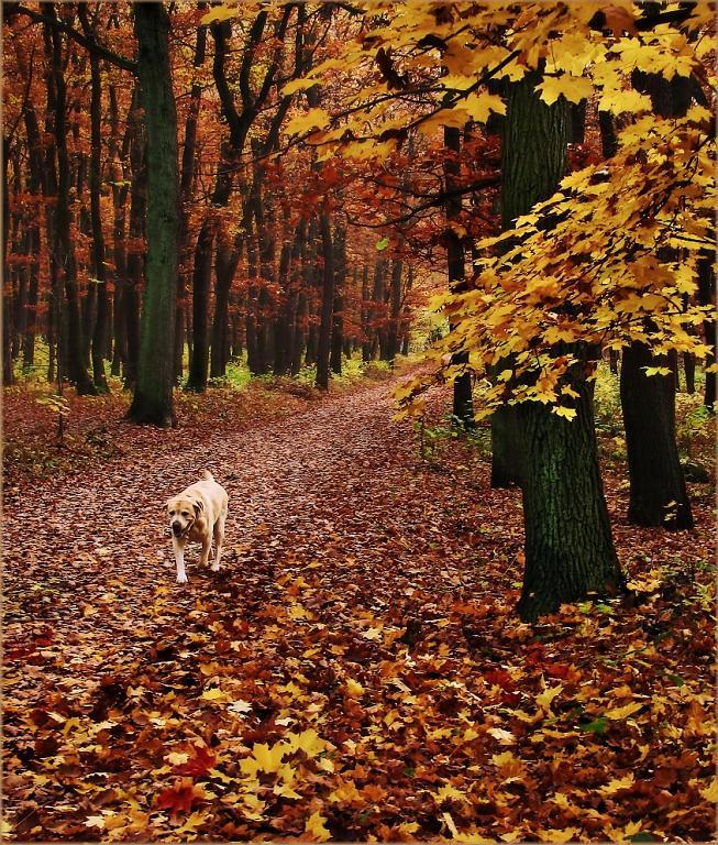 Podzimní les a pes
