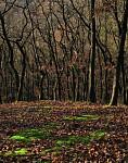 Z pražských lesů