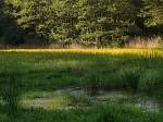 Blatouchová louka