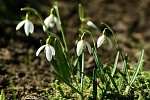 Svědkové jara