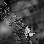 V zajetí