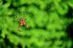 Pavouk s kořistí ve své síti