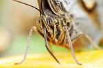 Fly like small butterFly - sosackama sosame...
