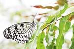 Fly like small butterFly - beloskvouci