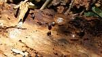 Cestou na chatu Skalka lesem..