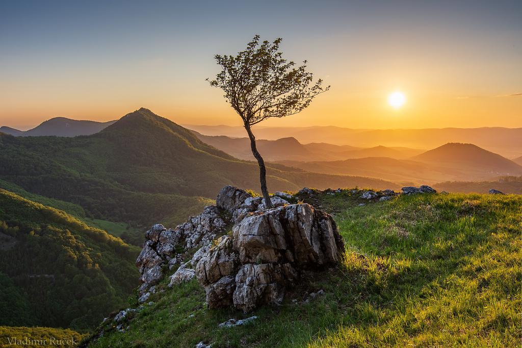 Na kopci nad Kopcom stojí strom zelený