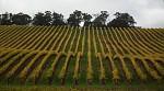 Jesenne vinice