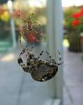 Pavoučí zápasy