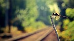 Čekání na vlak...:)
