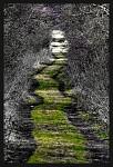 Zelený běhoun....