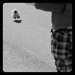 levitace