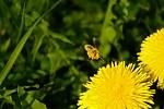 Fčela letí pracovat.