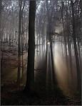 Slniečko v hmlovom lese