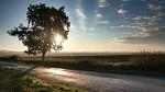 Slunečné ráno