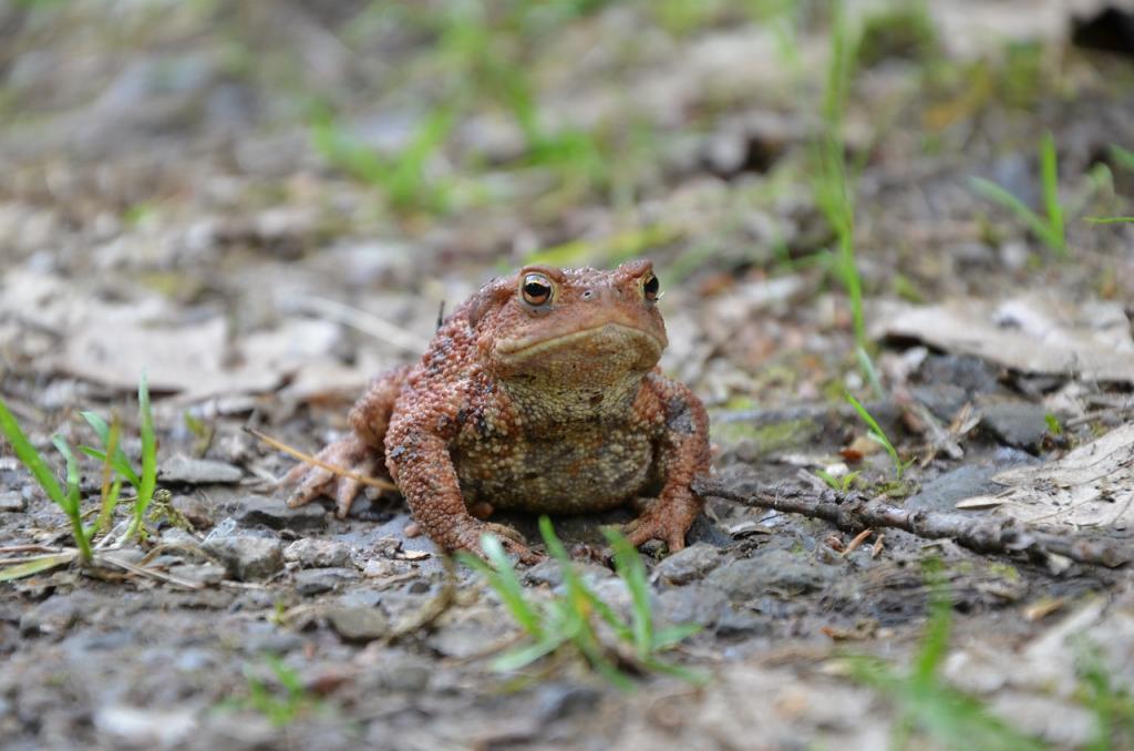Žába v lese