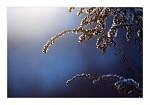Branou do zimního království