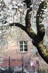 Okno do jarní zahrady