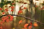 Tóny podzimu
