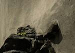 kámen a kvítí