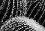 kaktusová variace I