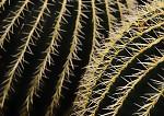 kaktusová variace II