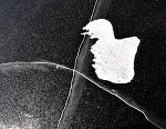 zamrzlé kačátko