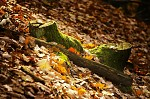 Loňská podzimní