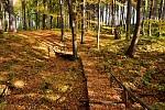 Na lesní stezce