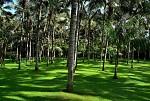 V palmové zahradě