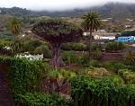 Dračí strom /největší na světě/