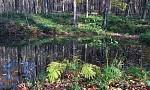 Lesní tíšina