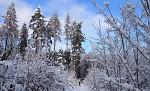 V zajetí zimy