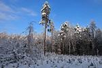 Na kraji obecního lesa