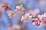 Jaro je všude