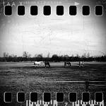 U koní