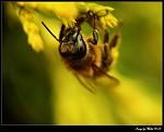 Hmyz se probouzí