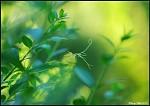 Zelenožluté ticho