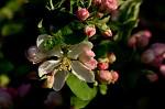 Květy jara I